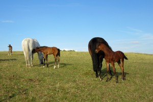 foals on mound (2)