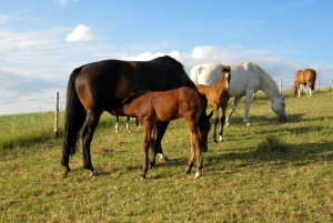 foals on mound (7)